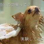 ストレスによる自立神経の乱れを治す!温冷浴の実験効果まとめ