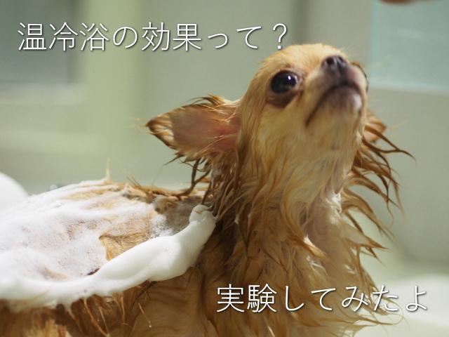 温冷浴 効果 自律神経