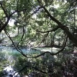 秘境の泉「丸池様」にたどりつけない!読んでおきたいアクセス方法