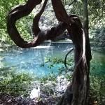 神秘の泉「丸池」の伝説と歴史を調べてみた。山形県遊佐町のとある観光地