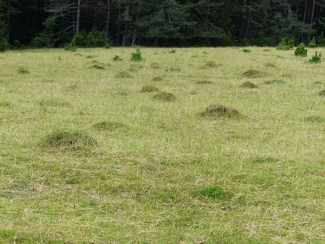 meadow-167469_640