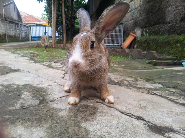 rabbit-466795_640