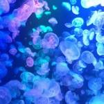 【アクセス・周辺情報】 世界No.1のギネス認定クラゲドリーム「加茂水族館」に行ってきたよ。