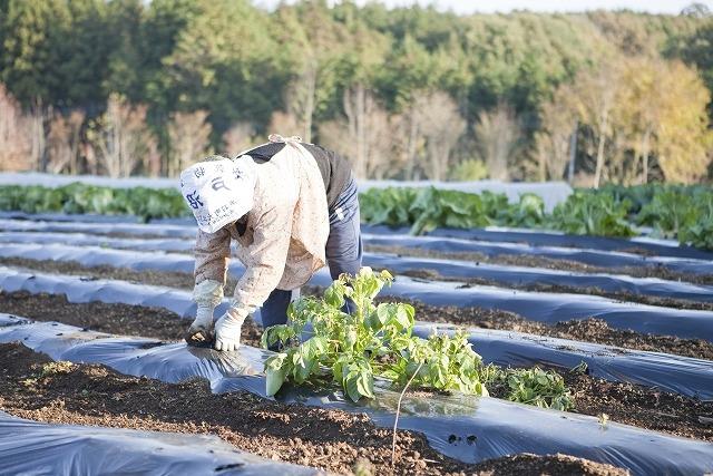 シニア起業 農林水産系