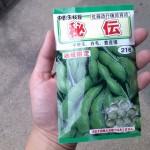 プランター枝豆の育て方1「種から苗まで育てる全工程まとめ」
