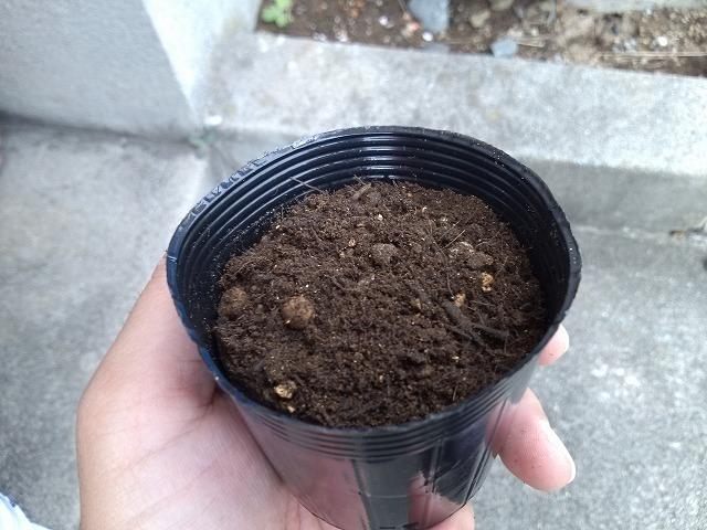 野菜ポット 培養土