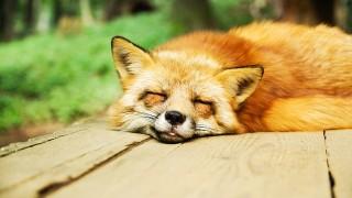 30代からの休息術。20代と違って「疲れたら休むは鉄則」に。