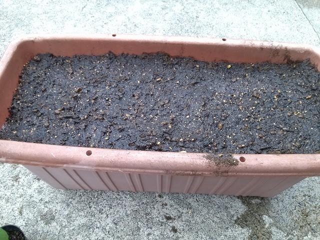 枝豆プランター 土を湿らせる