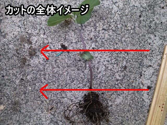 枝豆カット