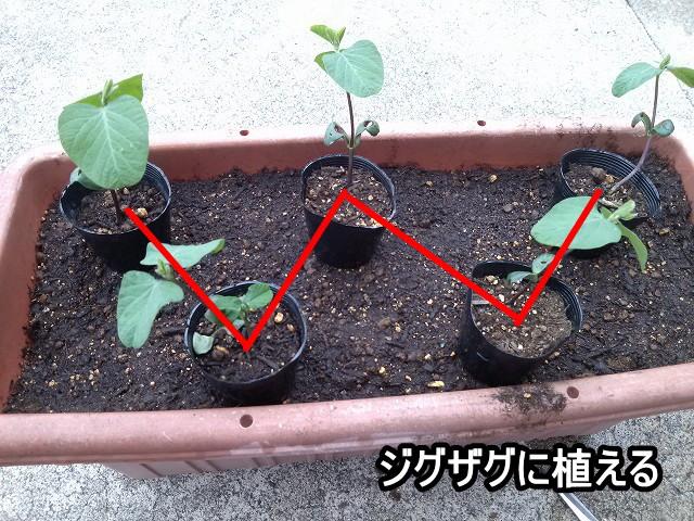 枝豆プランター ジグザグ 植える