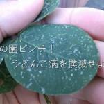プランター枝豆に異変!?「うどんこ病」の対策と治療法