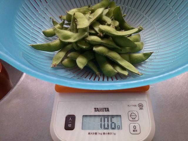枝豆 収穫 3回目