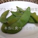 プランター枝豆は食べられるの?塩ゆでにして試食してみたよ
