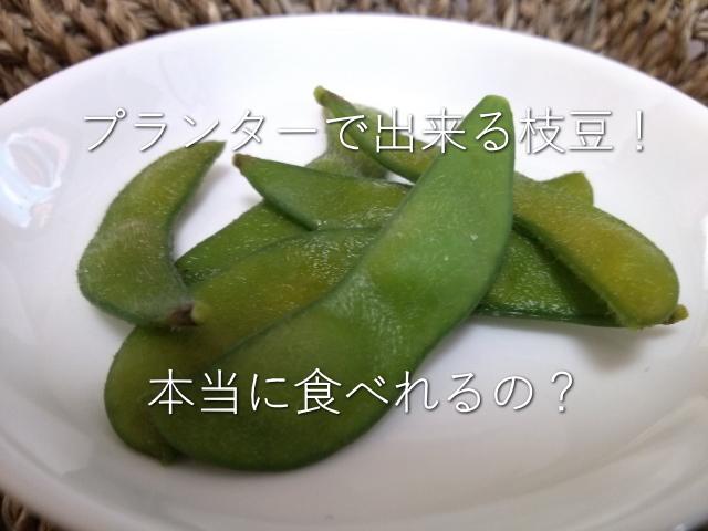 プランター 枝豆