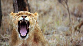 「感情的にならない本」から学ぶ怒りとイライラのコントロール方法